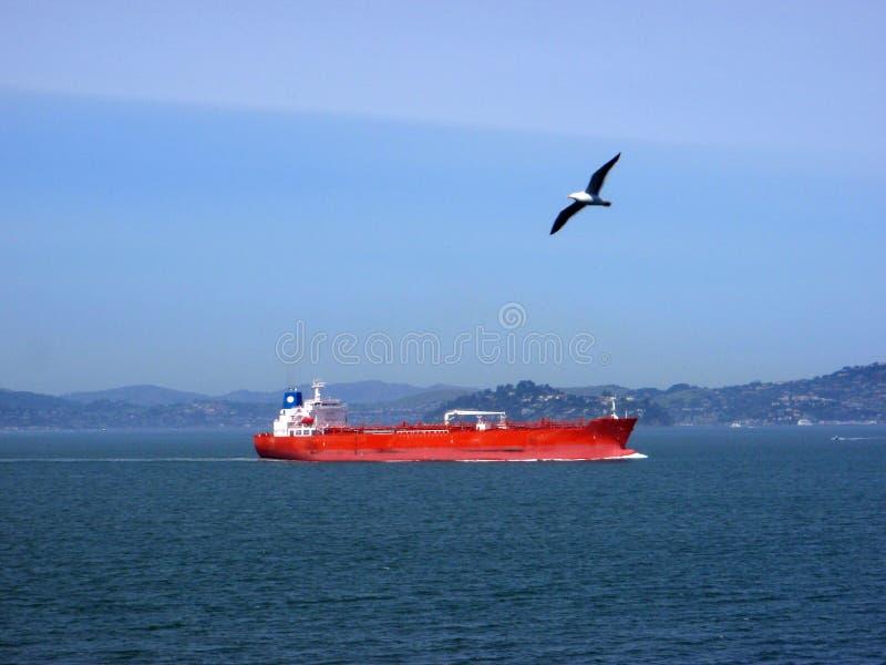 La nave da carico naviga attraverso San Francisco Bay come gabbiano di mare occidentale f immagine stock