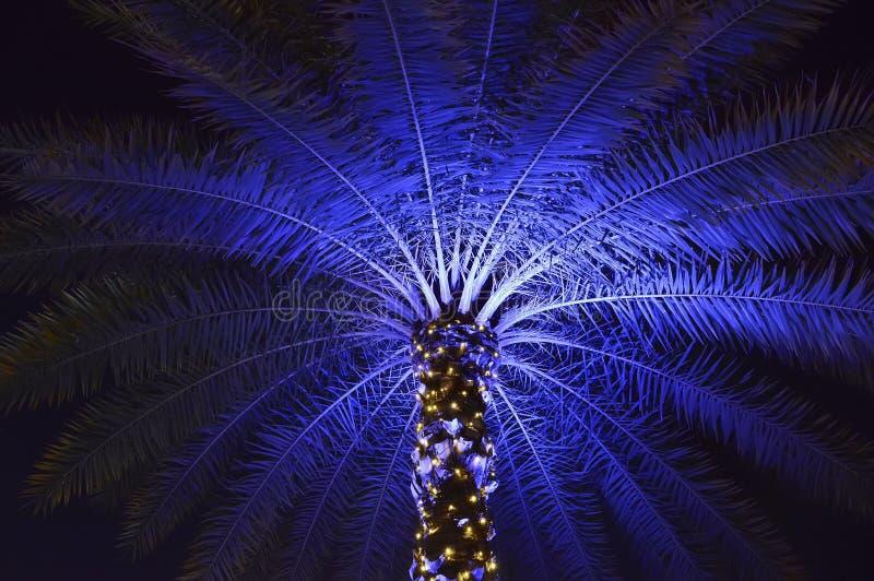 La Navidad adornó la palmera en Orlando fotos de archivo