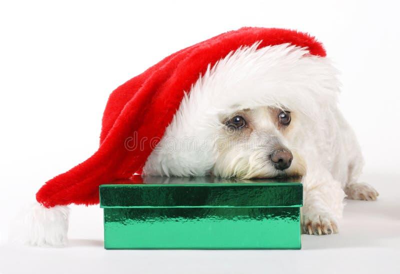 La Navidad de un perro imagen de archivo
