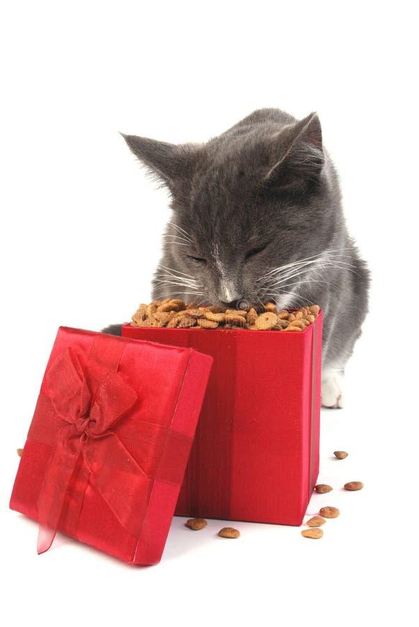 Download La Navidad del gato imagen de archivo. Imagen de navidad - 7151905