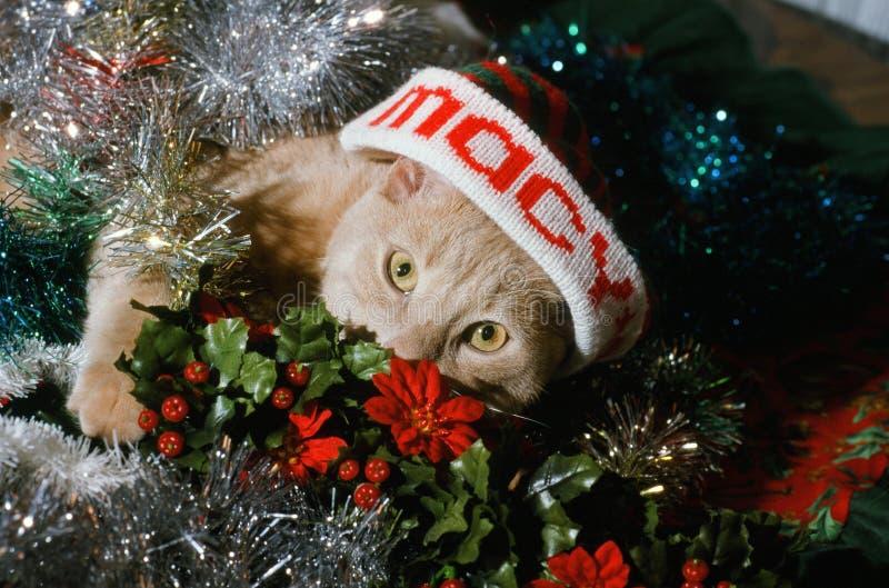 La Navidad Kitty foto de archivo libre de regalías