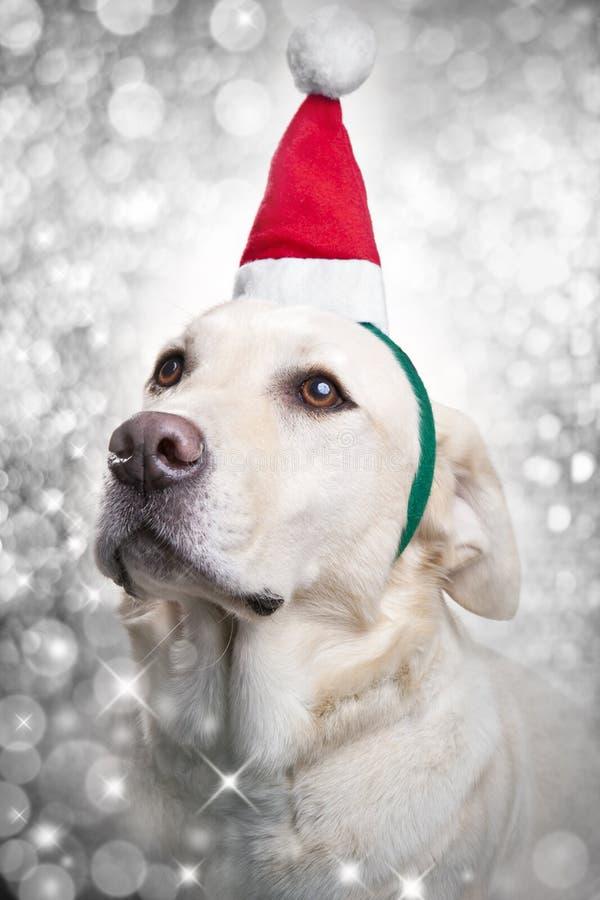 La Navidad Santa Dog imagen de archivo libre de regalías