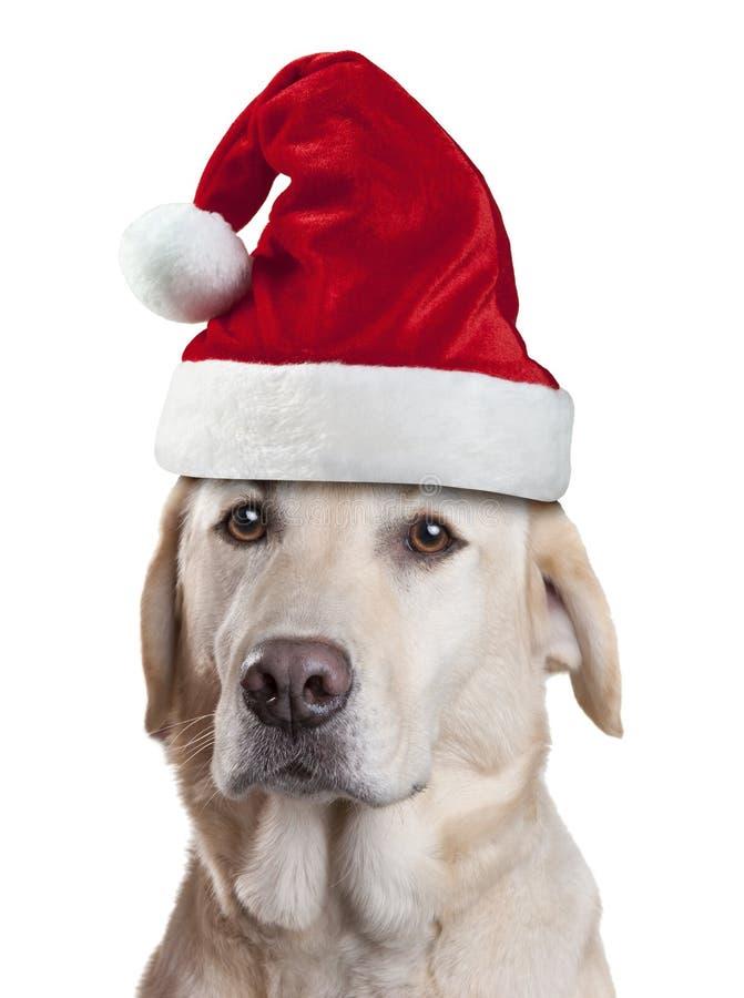 La Navidad Santa Hat Dog imagen de archivo