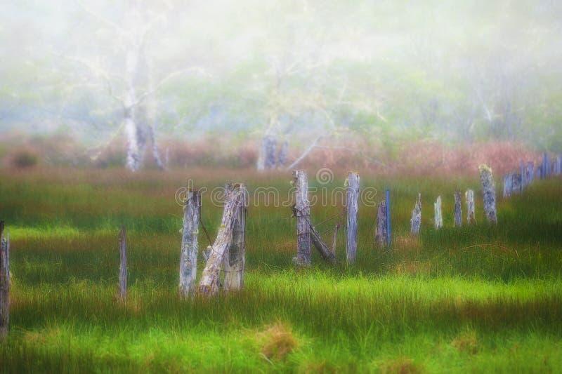 La nebbia in aumento rivela i verdi della molla in un campo recintato immagini stock