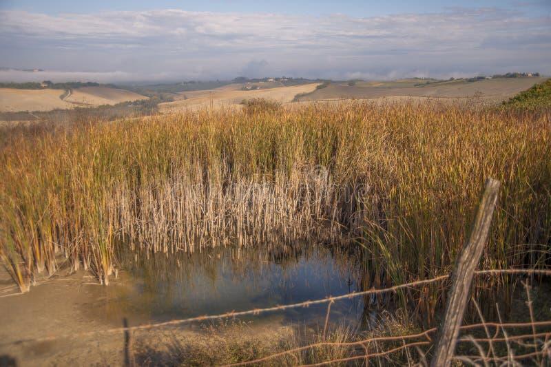 La nebbia di primo mattino forma uno strato sopra i campi asciutti in Toscana immagini stock libere da diritti