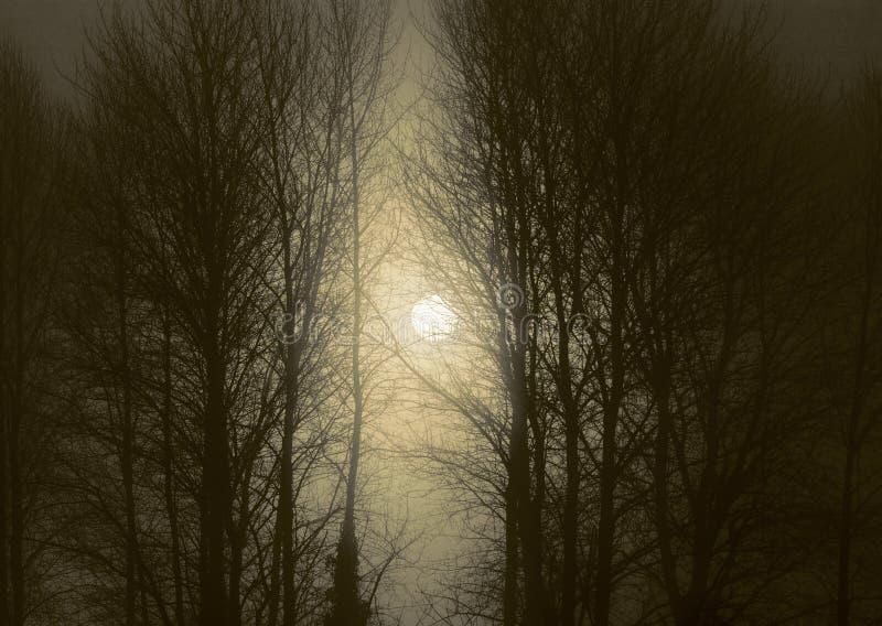 La nebbia e gli alberi migliorano dal sol levante immagini stock