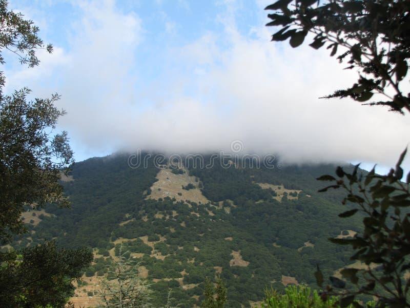 La neblina de la mañana foto de archivo