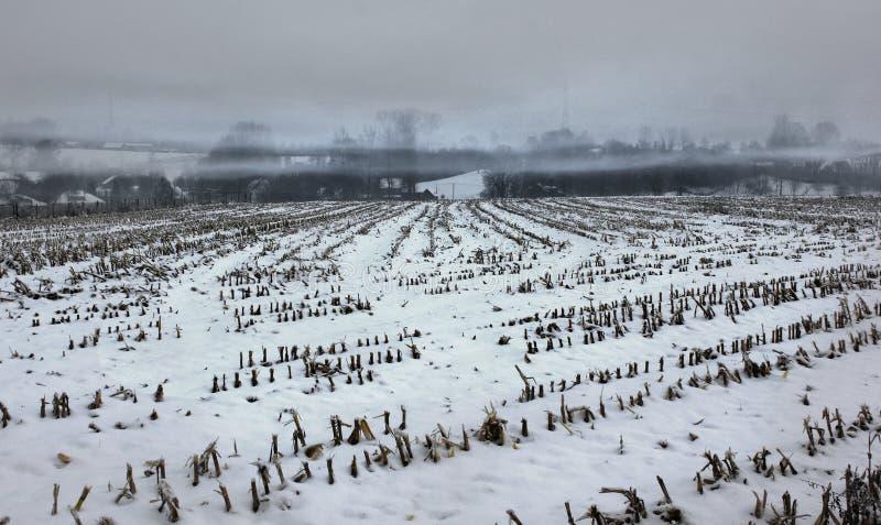 La neige brumeuse a couvert la zone de maïs vide photo stock