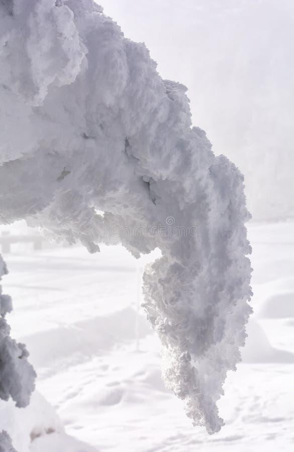 La neige a couvert la branche se pliant du poids photographie stock