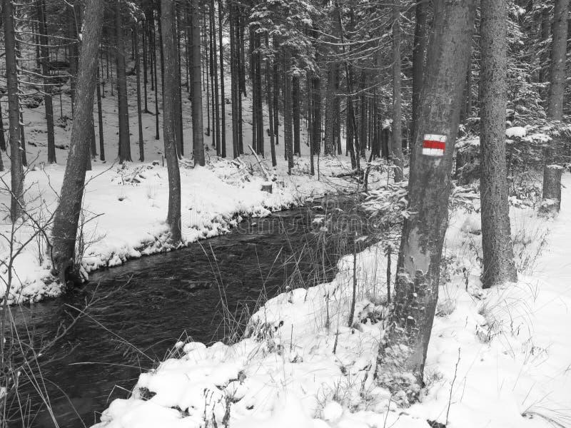 La neige a couvert la crique de courant de l'eau de forêt d'arbres, de branches et de pierres, paysage idyllique d'hiver en noir  photographie stock libre de droits