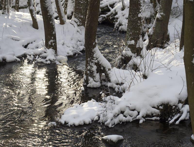 La neige a couvert la crique de courant de l'eau de forêt d'arbres, de branches et de pierres, paysage idyllique d'hiver en solei photos stock
