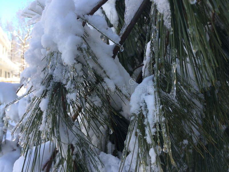 La neige a couvert des arbres images libres de droits