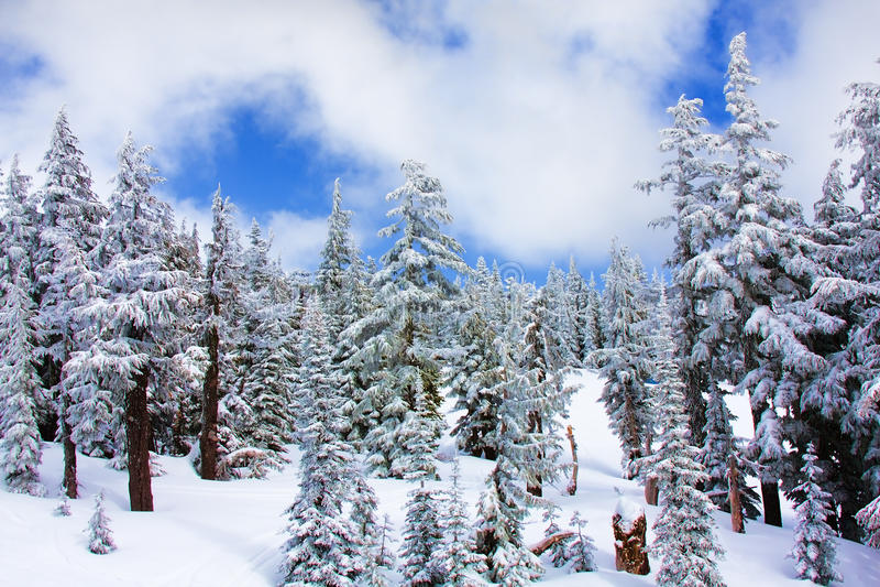 La neige a couvert des arbres photo libre de droits