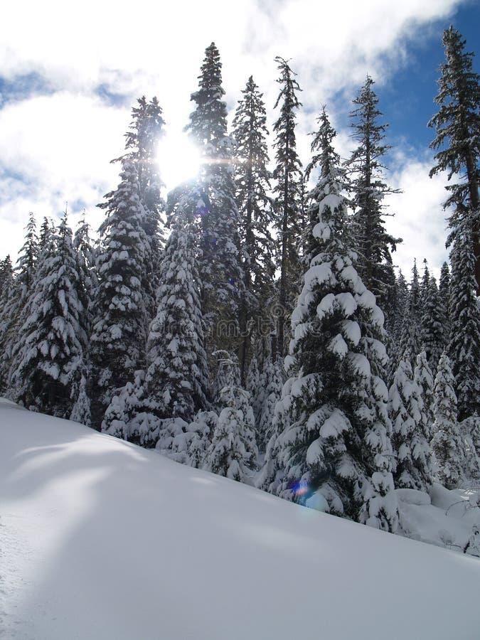 La neige a couvert des arbres image libre de droits
