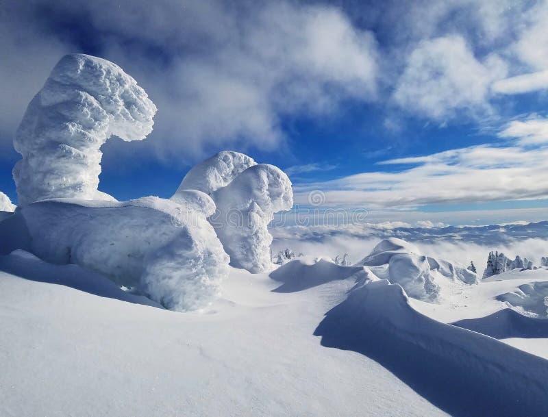 La neige a couvert des arbres de montagne dans le haut alpin un jour ensoleillé et bleu image libre de droits
