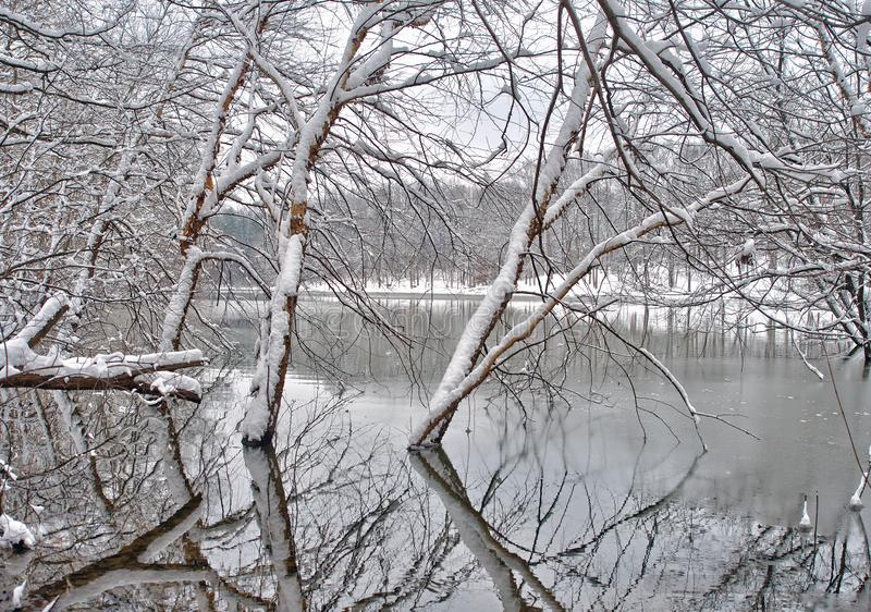 La neige a couvert des arbres par le lac photos libres de droits