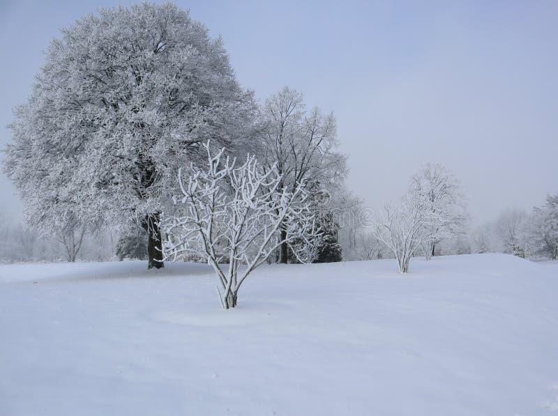 La neige a couvert des arbres un matin brumeux image stock