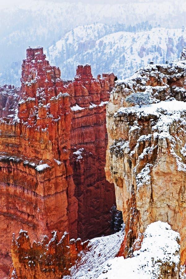 La neige a couvert des canyons de Bryce Canyon photo stock