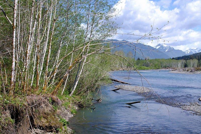 La neige a couvert des crêtes et des arbres de bouleau le long de la rivière photos libres de droits