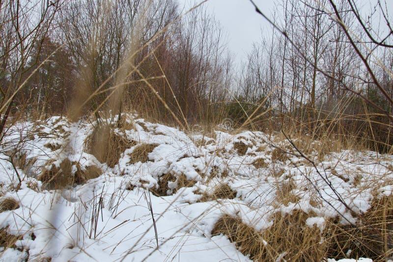 La neige a couvert des touffes et des monticules d'herbe photos stock