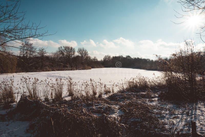 La neige a couvert Forest Lake Under Bright Sunshine photo libre de droits