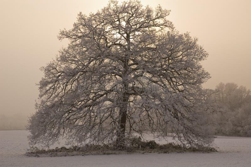 La neige a couvert l'arbre de fond brumeux image stock