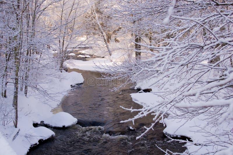 La neige a couvert la crique dans la forêt de pin photos libres de droits