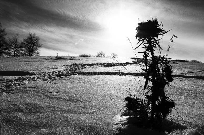 La neige a couvert la fleur image libre de droits