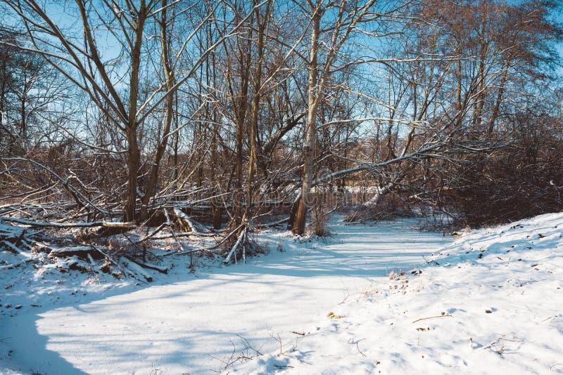 La neige a couvert la rivière dans la forêt sur Sunny Winter Day photo libre de droits