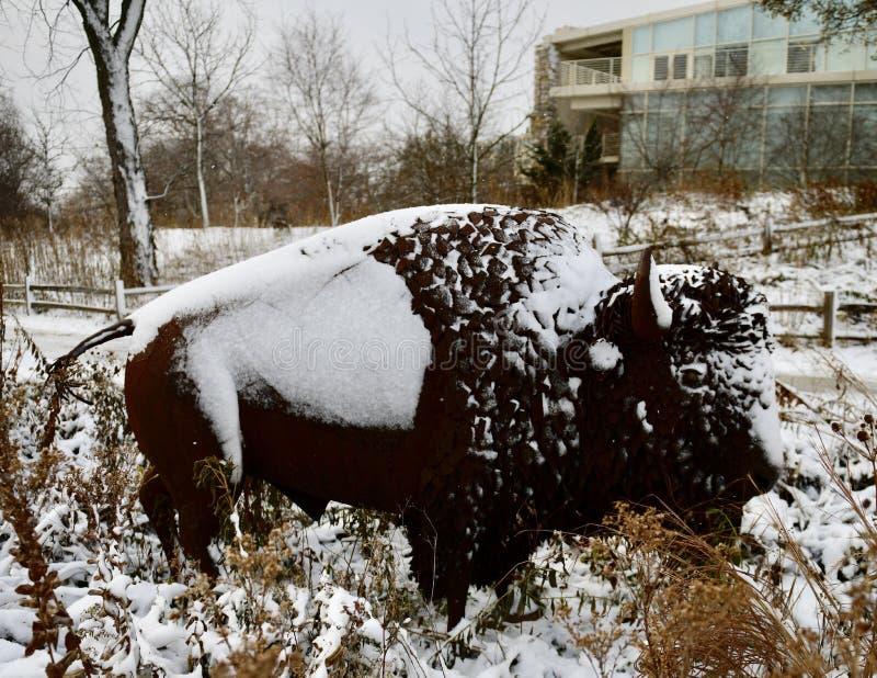 La neige a couvert le bison américain image libre de droits