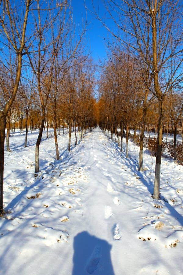 La neige a couvert le chemin photos libres de droits