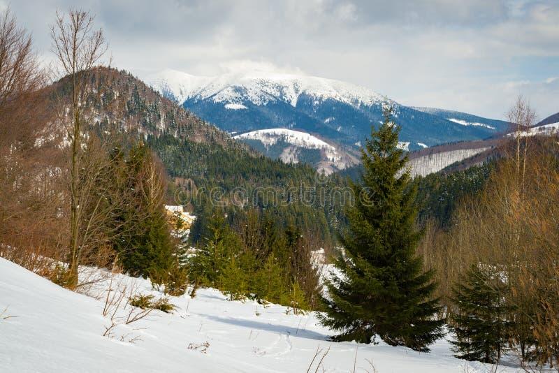 La neige a couvert le paysage image libre de droits