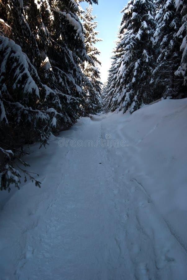 La neige a couvert le sentier de randonnée dans la forêt d'hiver de ciel clair en montagnes de Moravskoslezske Beskydy photos stock