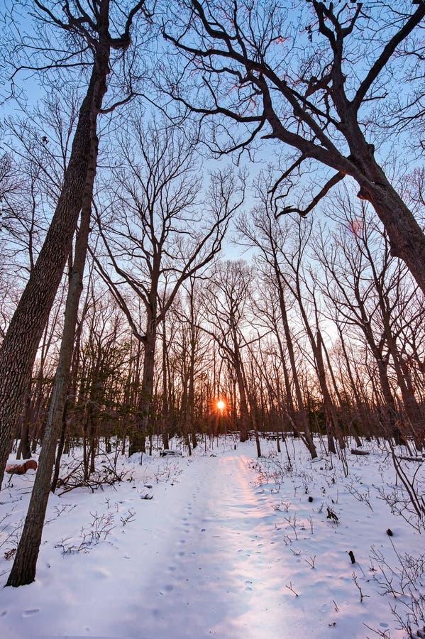 La neige a couvert le sentier de randonnée par une forêt vers un coucher de soleil images libres de droits