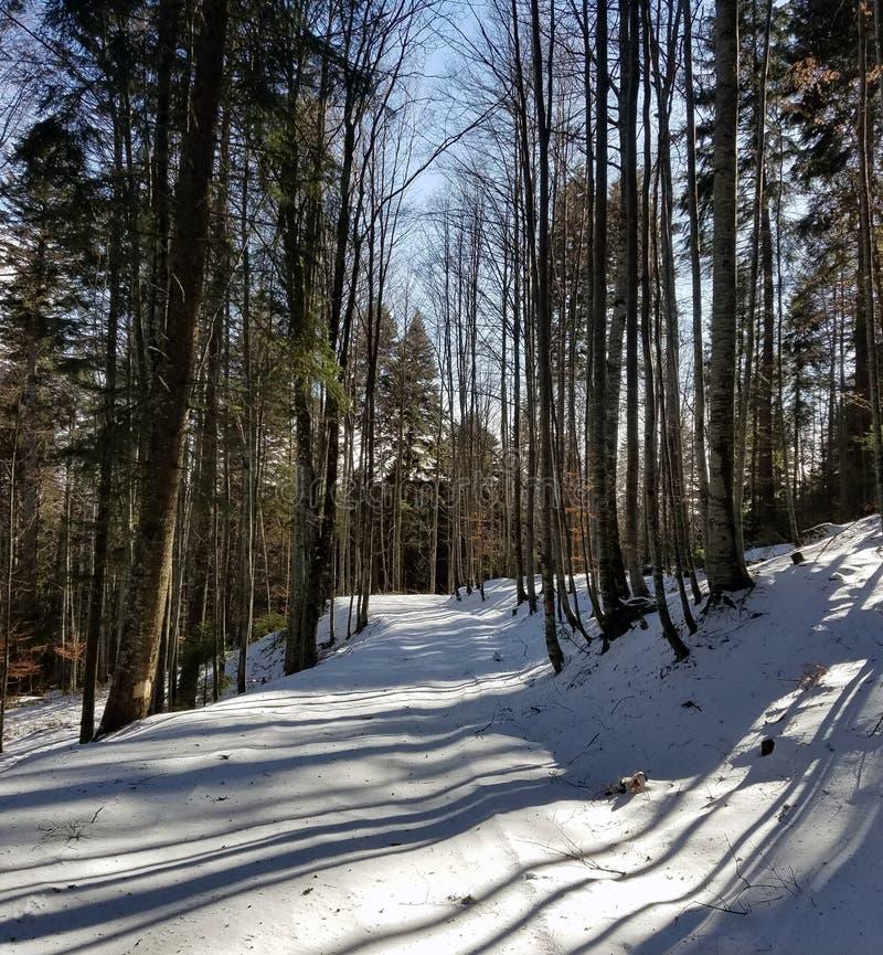 La neige a couvert la route dans le bois photo libre de droits