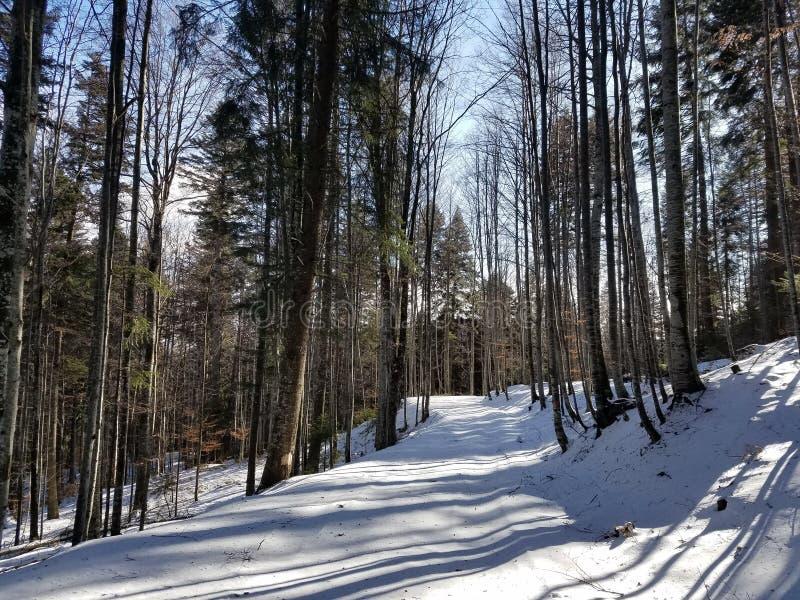 La neige a couvert la route dans le bois photographie stock libre de droits