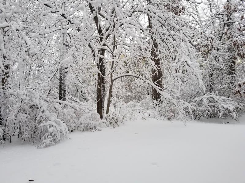 La neige a couvert la for?t images stock