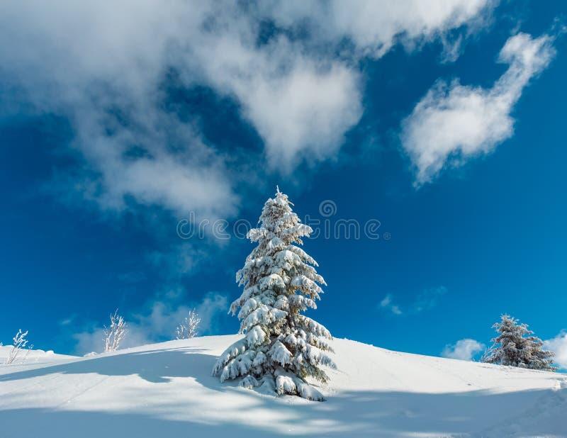 La neige d'hiver a couvert l'arbre de sapin en montagne images libres de droits