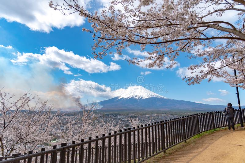 La neige en gros plan a couvert le mont Fuji Mt Fuji avec le fond bleu-foncé clair de ciel dans des fleurs de cerisier de Sakura image libre de droits