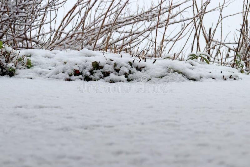 La neige fraîche est tombée à la terre images stock