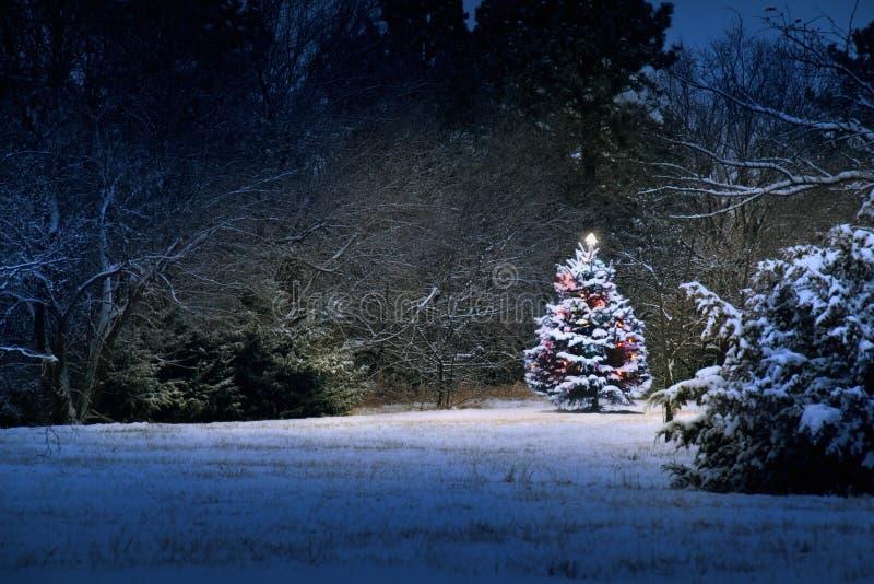 La neige magique a couvert l'arbre de Noël se tient brillamment images stock