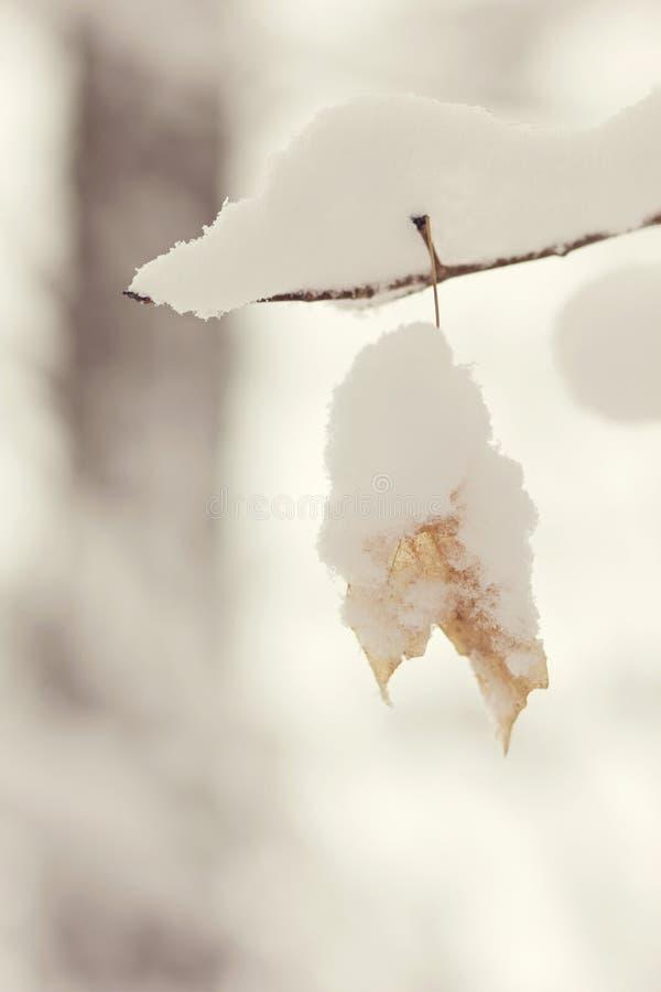La neige simple a couvert la feuille image stock
