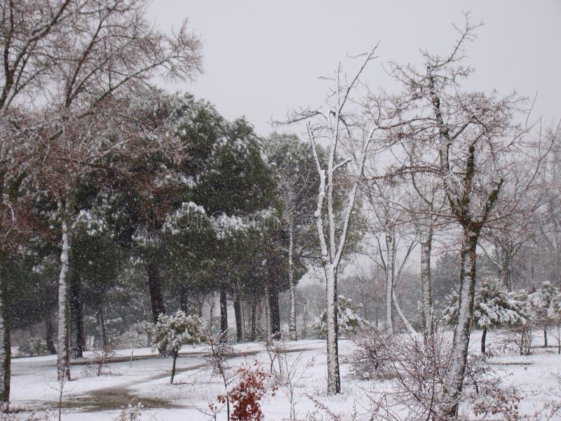 La neve cade nell'inverno vicino a Madrid fotografie stock