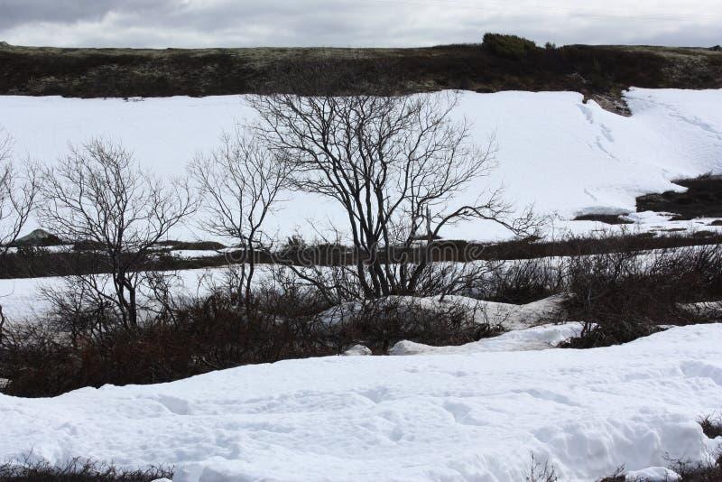La neve nella tundra in primavera immagini stock