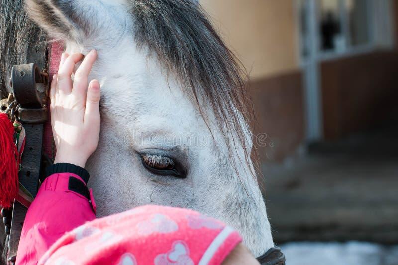 La niña acaricia el caballo gris imagen de archivo