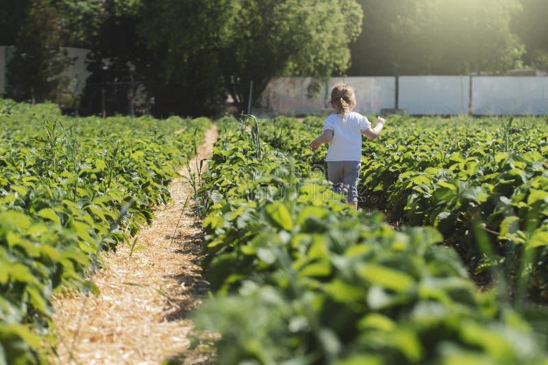 La ni?a corre a trav?s de un campo de la fresa en los rayos del sol del verano imagen de archivo