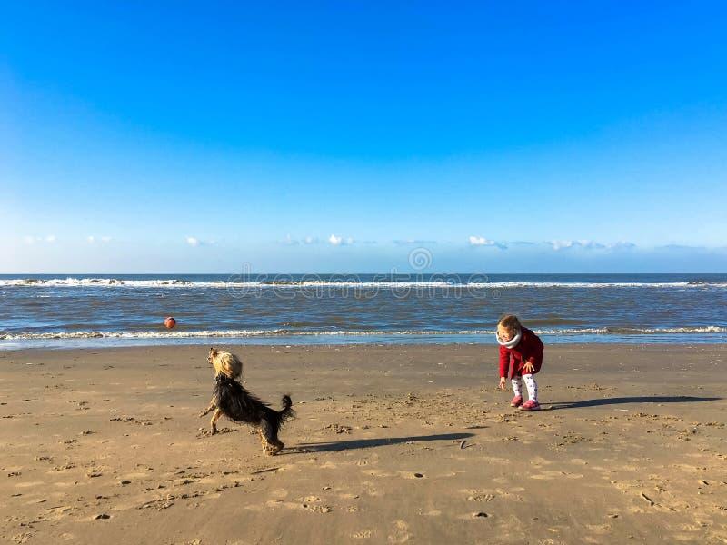 La niña juega con el perro en la playa fotos de archivo