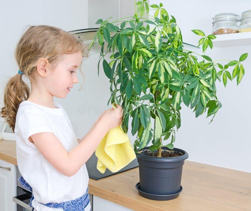 La niña limpia el polvo de la flor fotografía de archivo