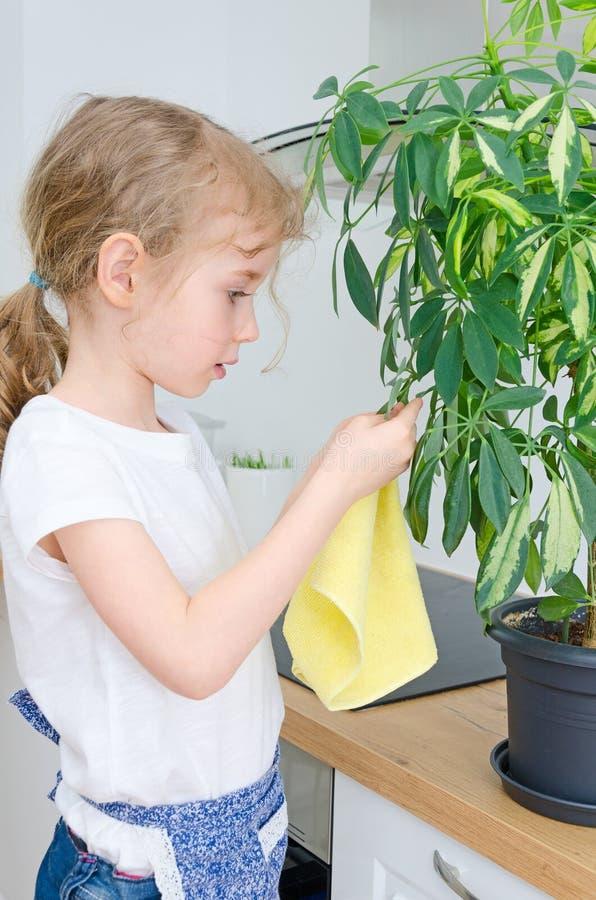 La niña limpia el polvo de la flor fotos de archivo