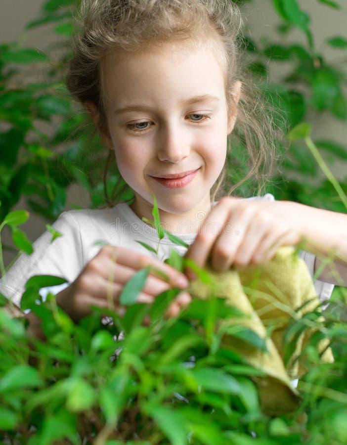 La niña limpia el polvo de las hojas foto de archivo